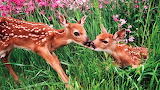 #Fawns