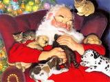 Santa and pets