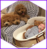 Poodles and newborn baby