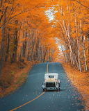 ^ Orange Everywhere ~ Muskoka, Ontario