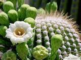 Amazing-cactus-wallpaper-wpt8401774-1024x769