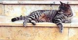 Katze auf Treppe