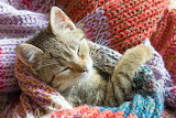 kitten in knitting
