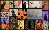 Collage 300 cats