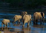 Elephants, South Africa...