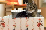 Cat n a box