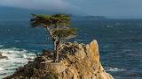 1920x1080 lone-cypress-monterey-peninsula-california