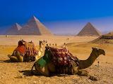 Camellos en Giza 2
