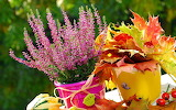 Flowers and autumn leaves