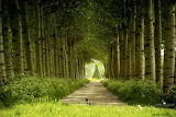 16-nature-photography-forest-by-larsvandegoor