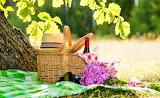 Picnic, grass, tablecloth, trees, basket, hat, bottle