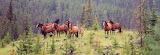 Wild Horses (8)