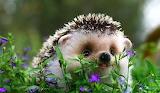 Baby-Animal