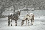 Horse Equine Snowfall
