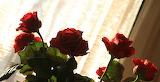 Róże na tle