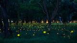 FirefliesSummerForestFloor.jpg.838x0 q80