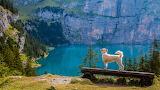 Dog Admiring Spectacular View