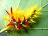 YellowOrangeCaterpillar