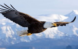 Eagle - Àliga