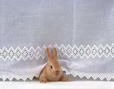 bunny with cloth