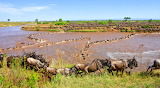 Great Migration ~ Mara River, Serengeti