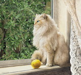 Still life with lemon Sueellen Ross