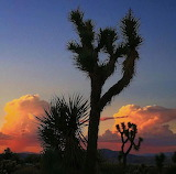 A Joshua Tree, Coachella Valley