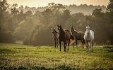 Wild Horses (9)