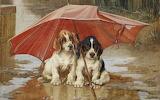 Pintura de perritos