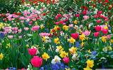 Spring Puzzle 1