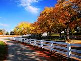 Horse Farm Autumn