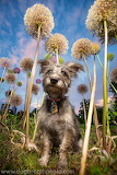 beautiful dog by dogbreathphoto.com