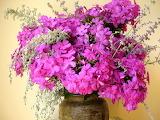 In-a-vase-on-garden