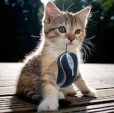 mouse catcher