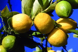 Photo-citron