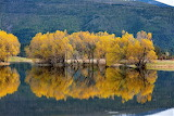 Willows reflected in pond near Ovando Montana
