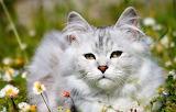 Nice white cat