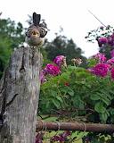 Loud Bird In The Rose Garden
