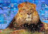King of Animals photo collage
