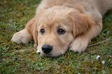 Puppy Love @ Pixabay...