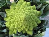 vegetable or geometry?