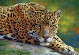 Peaceful jaguar