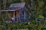 Shack in woods