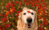 ☺♥ Crowned by red leaves...