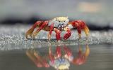 ☺ Crab...