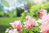 Watering-