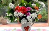 Rose-jasmine-flowers