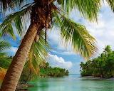 Tropusok-palma