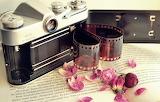 Flowers, camera, petals, film, book