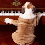 Play it again...